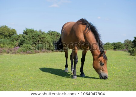新しい 森林 ポニー 公園 自然 馬 ストックフォト © flotsom