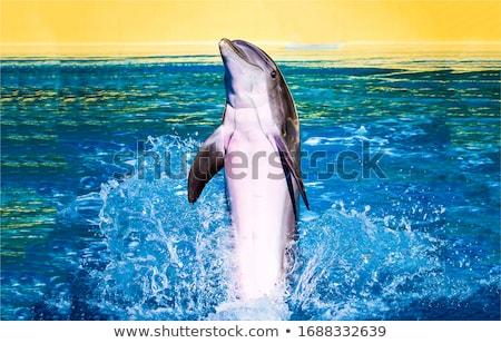 дельфин воды из ребенка улыбка Сток-фото © Mikko