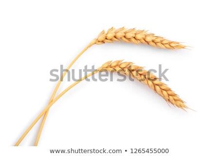 2 ライ麦 パン 耳 小麦 木製 ストックフォト © OleksandrO