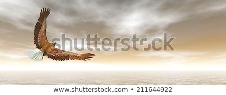 adelaar · vliegen · 3d · render · oceaan · zonsondergang · hemel - stockfoto © elenarts