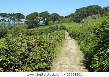 Country lane in St. Mary's Isles of Scilly. Stock photo © latent