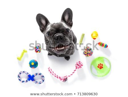 Huisdier speelgoed geïsoleerd witte fotografie witte achtergrond Stockfoto © gitusik