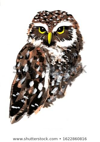 coruja · pássaro · cabeça · retrato · olhos · pena - foto stock © fouroaks