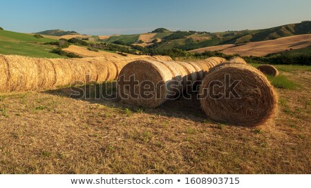 trillend · land · landschap · stro · veld · bomen - stockfoto © rekemp