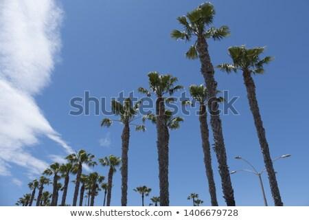 árvore grupo blue sky verão natureza Foto stock © FrameAngel