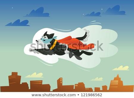 ハスキー 救助 犬 徒歩 レース 屋外 ストックフォト © ivonnewierink