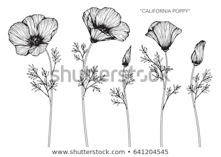 california poppy flowers eschscholzia californica stock photo © alex9500