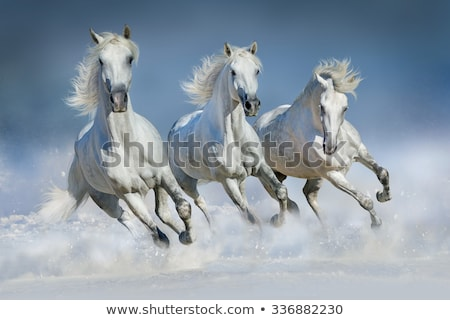 Horse galloping on snow Stock photo © mady70