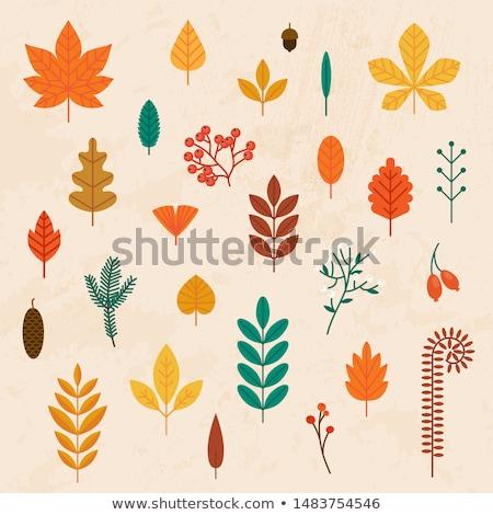 najaar · pompoenen · bladeren · natuur · oranje - stockfoto © robuart