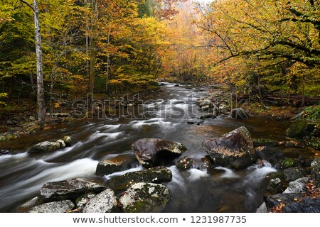 Little Pigeon River at Tremont in Great Smoky Mountains Stock photo © GreenStock