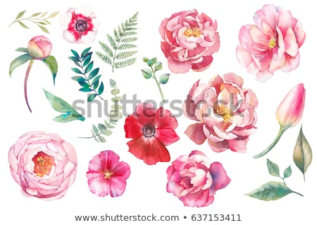 Watercolor Peony Flower Stock photo © kostins