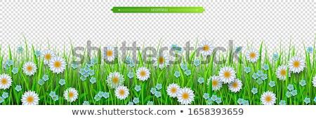 botânico · folhas · flores · branco - foto stock © cammep