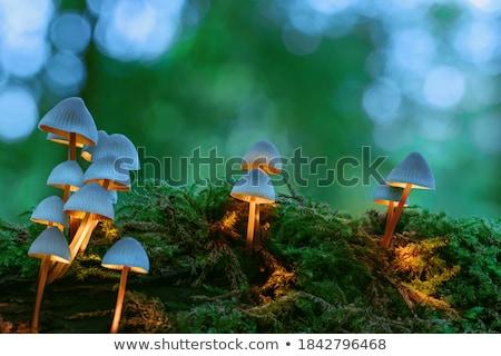 Gomba moha fű nő tinóru gomba növekvő Stock fotó © romvo