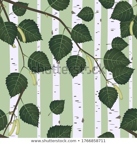 Abedul forestales ruso árbol primavera Foto stock © MaryValery