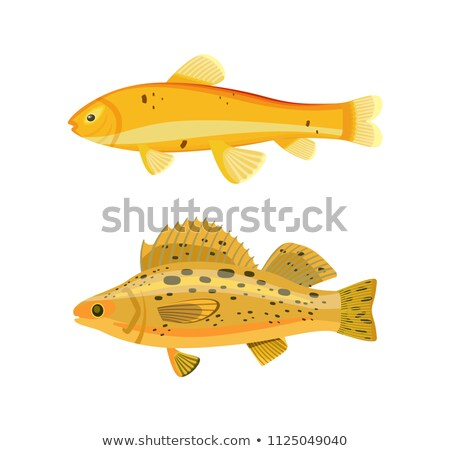 Yellow Fish Types Zebra Set Vector Illustration Stock photo © robuart