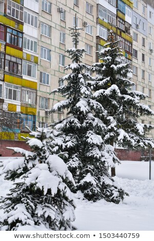 trees under a thick layer of snow on the background of high rise stock photo © tanach