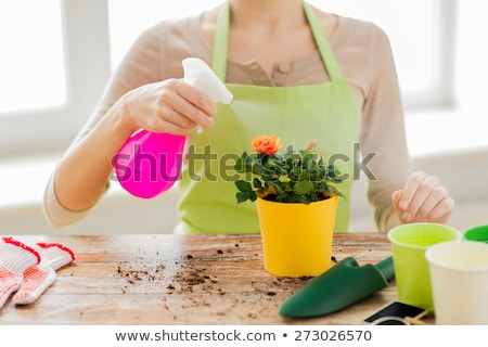 close up of woman hands spraying roses in pot Stock photo © dolgachov