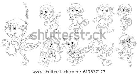 Animal macaco videira ilustração fundo Foto stock © colematt