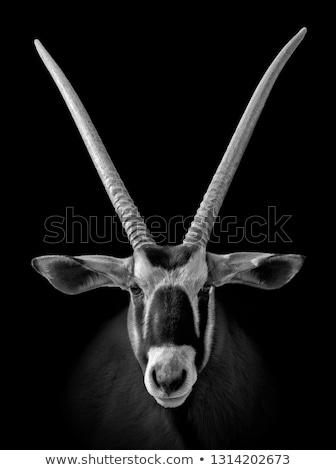 African animal, cute oryx antelope, gazelle isolated on white background, vector Stock photo © MarySan