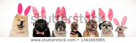 french bulldog and american bully puppies wearing bunny ears  Stock photo © feedough