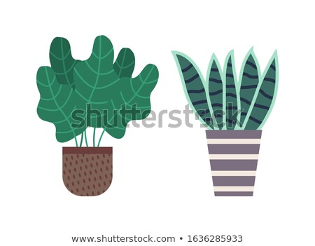 Haworthia Pot with Soil, Foliage and Flora Set Zdjęcia stock © robuart