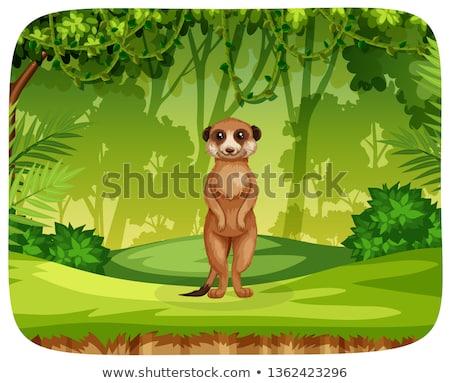 Giungla scena illustrazione albero erba felice Foto d'archivio © bluering