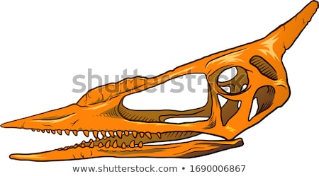 Hunter czaszki szkic broda hat Zdjęcia stock © netkov1