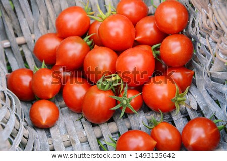 freshly picked ripe tomatoes in the corner of a basket stock photo © sarahdoow