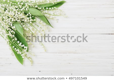 background lily of the valley Stock photo © tottoro