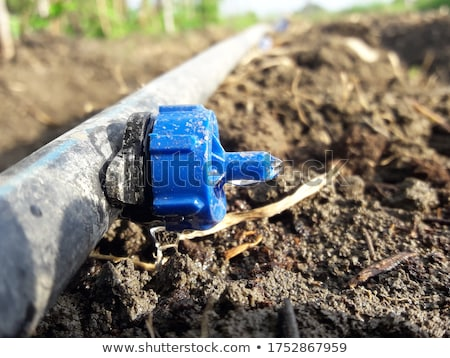 Agricultural hoses for irrigation Stock photo © deyangeorgiev