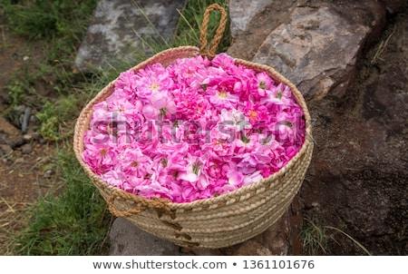 Rose petals basket Stock photo © simas2