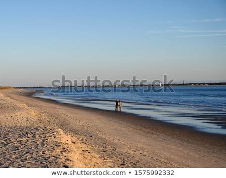 romantic couples walking down the beach stock photo © get4net