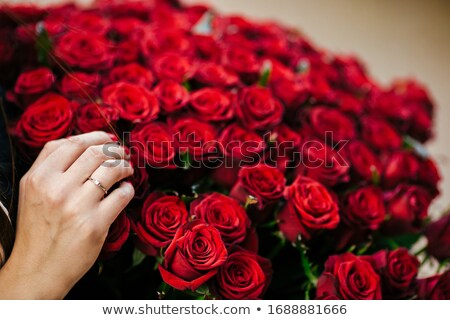 young beauty smelling bouquet of red roses pleasure harmony stock photo © gromovataya