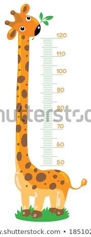 Giraffe with meter scale Stock photo © richardjary