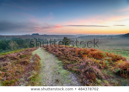 the new forest stock photo © flotsom