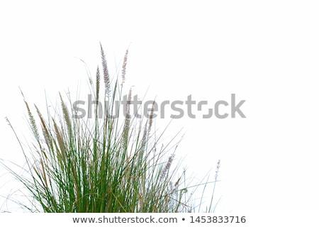 Zöld bokor zöld fű fehér részlet fű Stock fotó © tashatuvango