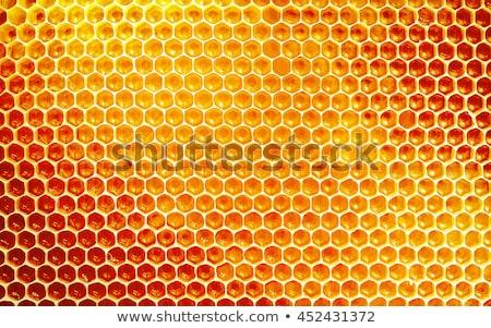 Detay arı kovan küçük Çek çiftlik Stok fotoğraf © jonnysek