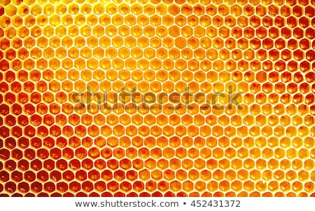 abelha · colméia · rocha · parede · pomar · de · macieiras · raso - foto stock © jonnysek