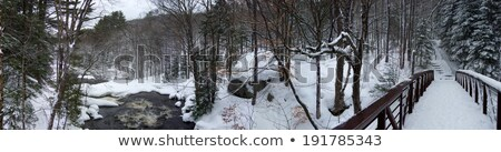Trees in a forest, Orangeville, Dufferin County, Ontario, Canada Stock photo © bmonteny