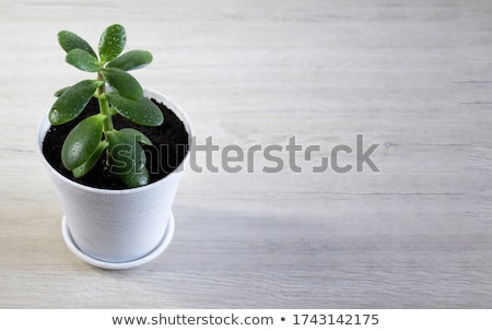 ストックフォト: 緑 · ジューシーな · マクロ · ショット · 美