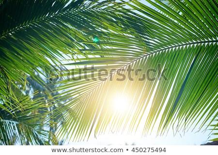 Trópusi tengerpart nappal pálmafák fa nap tenger Stock fotó © ankarb