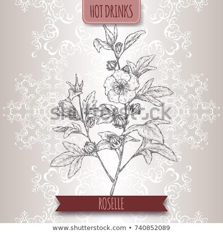 Ebegümeci kullanılmış çay meyve çiçek Stok fotoğraf © Mikko