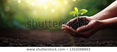 ストックフォト: 小 · 芽 · 手 · 自然 · 空 · フィールド