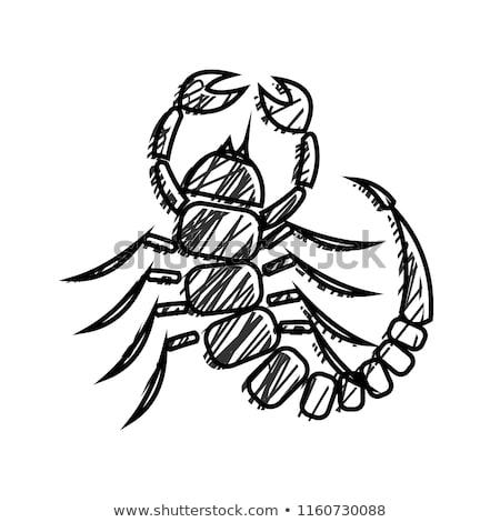 Grunge escorpião parede arte nosso animal Foto stock © Tawng