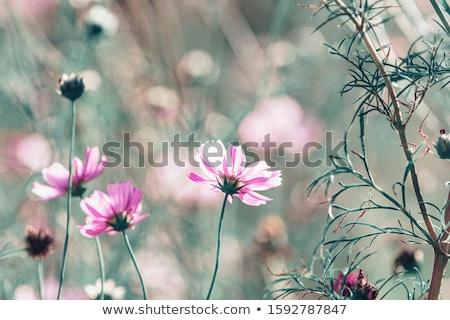 Campo de grama paisagem flores silvestres flor árvore Foto stock © stoonn