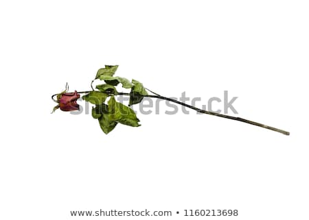 A bouquet of withered roses and flowers Stock photo © flariv