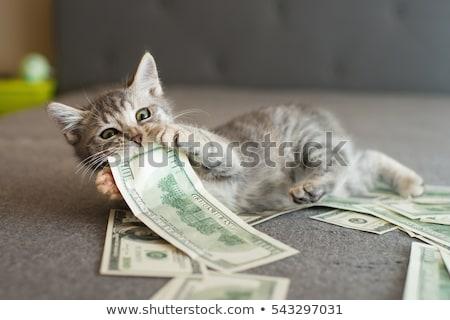 Macska falat pénz fehér kanapé pénzügy Stock fotó © Mikko