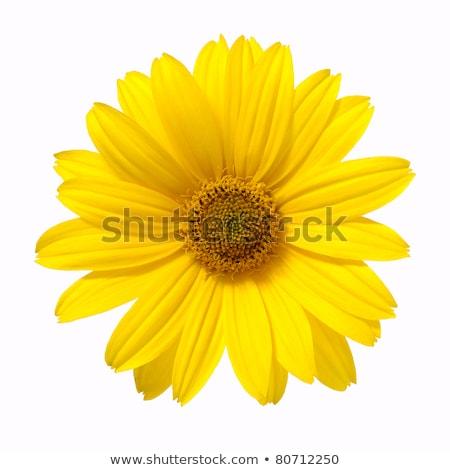 цветения желтый Daisy цветы закат небе Сток-фото © homydesign