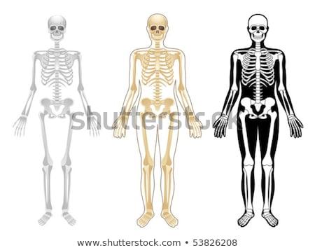 Transparente humanos hueso estructura movimiento salud Foto stock © kentoh
