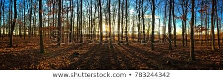 Beautiful Sunset Behind A Clump Of Trees Stock photo © Digoarpi